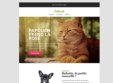 Envato market theme newsletter template