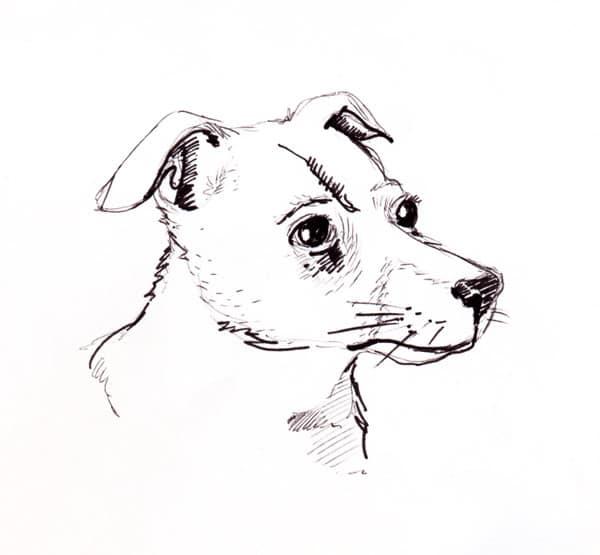 Illustration jack russell