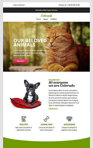 Exemple newsletter animal